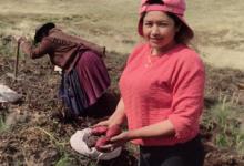 ANITA SHAMELY en plena cosecha de papas